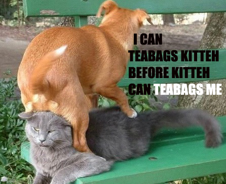 cat-dog-teabag-copy