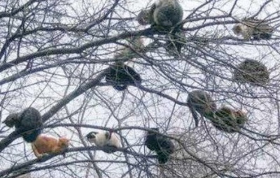 funny-pictures-cats-are-stuck-in-trees