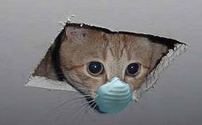 ceiling_cat_swine_flu.jpg (JPEG Image, 292x188 pixels)_1257985327702