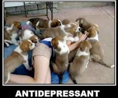 Pile-o-puppies